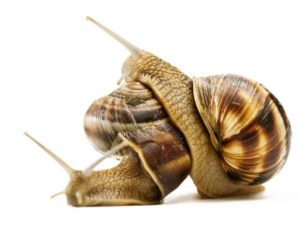 actifs-cosmetiques-anti-rides-bave-escargots