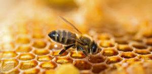 actifs-cosmetiques-anti-rides-miel