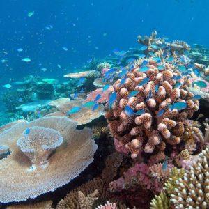 barriére de corail